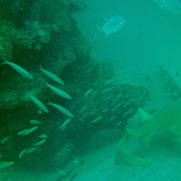 The Paradise Reef Of Collier County